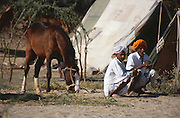 Rajasthani men sat on their haunches at the Mallinath Fair at Tilwara near Balotra, Rajasthan, India.