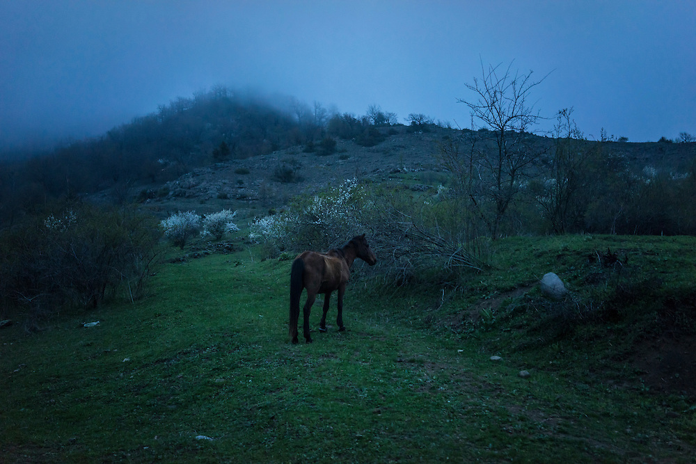 VANK, NAGORNO-KARABAKH - APRIL 21: A Karabakh horse, a breed originally developed locally and which is now threatened with extinction, stands on a hillside in the fog on April 21, 2015 in Vank, Nagorno-Karabakh. Since signing a ceasefire in a war with Azerbaijan in 1994, Nagorno-Karabakh, officially part of Azerbaijan, has functioned as a self-declared independent republic and de facto part of Armenia, with hostilities along the line of contact between Nagorno-Karabakh and Azerbaijan occasionally flaring up and causing casualties. (Photo by Brendan Hoffman/Getty Images) *** Local Caption ***