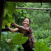 Nepal 2014. Pangma village. Berka Maya collecting leaves to feed the pig.