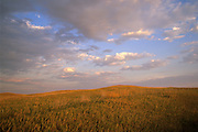 Prairie grasses glow under a setting sun in Badlands National Park, South Dakota.