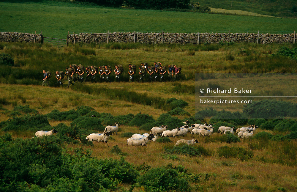 Young Paratroop Regiment squad run with 35lb loads during rigorous 10-mile march near sheep through Yorkskhire countryside