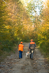 A father and son hunting grouse and woodcock in a private forest in Jefferson, New Hampshire.