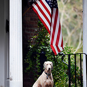 A dog stands guard outside a home in The Old Point neighborhood off of Pinckney Street on February 3, 2014.