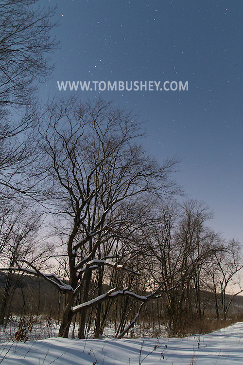 Chester, New York - The constellation Orion is visible in the sky above the trees at Goosepond Mountain State Park on Feb. 3, 2015. The full moon was shining on the park.