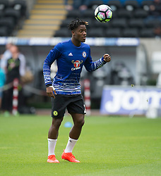 Michy Batshuayi of chelsea - Mandatory byline: Alex James/JMP - 07966386802 - 11/09/2016 - FOOTBALL - Barclays premier league -swansea,Wales - Swansea v Chelsea  -