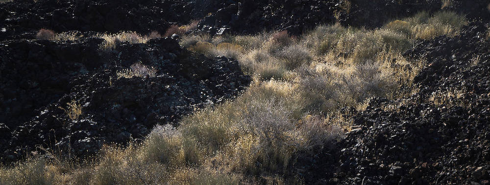 Ancient lava field with grasses in it.  Snow Canyon State Park in Utah outside St. George.