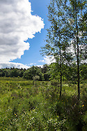 Europa, Deutschland, Nordrhein-Westfalen, Troisdorf, Birken in der Wahner Heide. - <br /> <br /> Europe, Germany, Troisdorf, North Rhine-Westphalia, birch trees in the Wahner Heath.