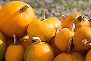 Pumpkin squash for sale at roadside stall in Pays de La Loire, France