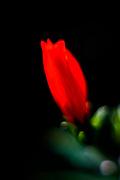 Red flower Artistic macro