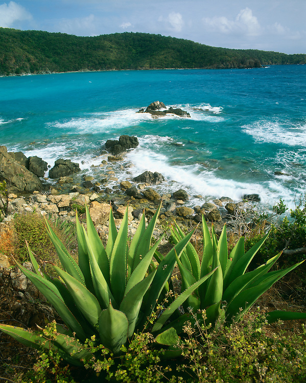 6201-1012 ~ Copyright: George H. H. Huey ~ Great Lameshur Bay with agaves, from the Yawzi Point Trail. Late afternoon. St John Island.  U.S. Virgin Islands National Park.