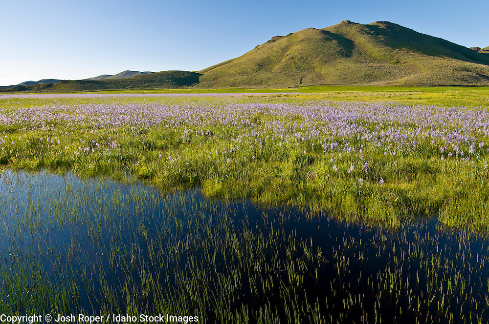 Idaho, Camas Prairie. The Camas Prairie is a beautiful spot to see dramatic wildflowers in spring.