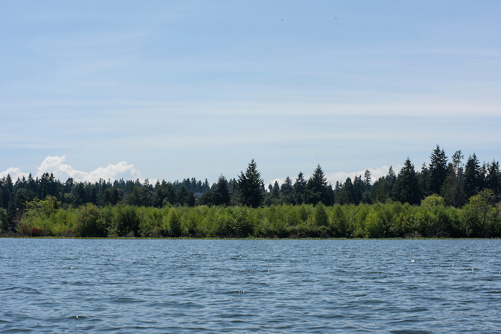 Mountlake Terrace, Washington - July 13, 2015: Edmount Island, is &quot;considered the spiritual homeland&quot; of &Uuml;berstadt. <br /> <br /> After the great BBQ fire of 2009, setting foot on the island has been deemed illegal by the local Mountlake Terrace authorities. The fire is considered to be the event that solidified the early &Uuml;berstadtis. <br /> <br /> <br /> <br /> The Kingdom of &Uuml;berstadt is led by nineteen-year-old King Adam I, (Adam Oberstadt). The Barony of Rosewood -- the micronation's capitol and the Oberstadt family home -- is nestled in the Seattle suburb of Mountlake Terrace, Wash. <br /> &Uuml;berstadt also claims territory of nearby Edmount Island on Lake Ballinger -- called The Barony of Ballinger and &quot;considered the spiritual homeland of the nation.&quot; Both baronies reside within the Duchy of Edmount which &quot;is situated entirely within the boundaries of the city of Mountlake Terrace, Washington,&quot; according to the &Uuml;berstadt website.<br /> &Uuml;berstadt  was founded by King Adam I and his high school friends March 6, 2010, and was governed by judges as a kritarchy. Before taking the crown, Adam was &Uuml;berstadt's chief judge. After graduation, many of the &Uuml;berstadti moved away to college and &Uuml;berstadt's populace shrank. Activities would shift from the high school to Rosewood, and the governing style morphed to a unitary constitutional monarchy. According to the micronation's website &Uuml;berstadt is a sovereign state &quot;guided by the principles of direct democracy, socialist economics, and environmentalism.&quot; <br /> <br /> CREDIT: Matt Roth