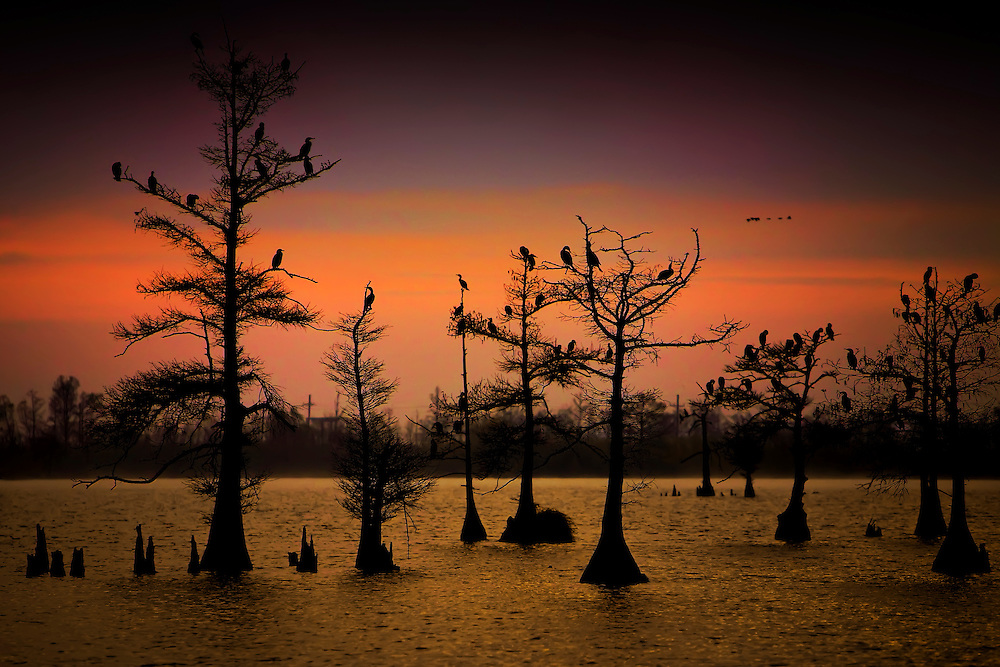 Cormorants rest at late evening in Venice, LA.  Copyright 2011 Reid McNally