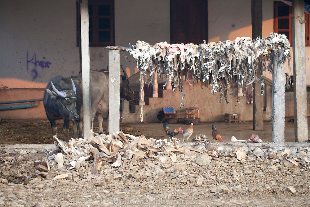 .Animal slaugher and rendering area behind Phousy public market in Ban Saylom Village, just south of Luang Prabang, Laos.