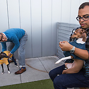 WASHINGTON, DC - OCT07: Twin brothers Greg and Dennis Lacot (L-R), play with their Italian greyhound dogs Gemma and Giada (L-R), also siblings, at the rooftop dog park at City Market at O Street apartments where the brothers share an apartment, October 7, 2016, in Washington, DC. As new apartment buildings continue sprouting around downtown DC, developers know that a large percentage of renters in the city have dogs and make their choices of buildings based largely on pet-friendliness. So they go out of their way to be welcoming to dogs.  (Photo by Evelyn Hockstein/For The Washington Post)