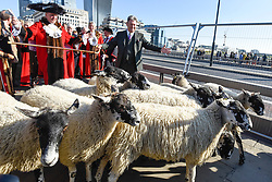 © Licensed to London News Pictures. 30/09/2018. LONDON, UK. Alan Titchmarsh, TV presenter, leads the annual Sheep Drive of Worshipful Company of Woolmen across London Bridge ahead of being made a Freeman of the City of London.  The event raises funds for the Lord Mayor's Appeal and the Woolmen's Charitable Trust. Photo credit: Stephen Chung/LNP