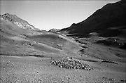 The Goat People: In late November, at the beginning of summer cattle, mostly goat and sheep are moved from the valleys up to 3000 meters to the Andes Mountains where cheese production is the main product.
