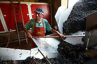 Domaine du Vissoux, Beaujolais.arrival of the grapes from the vineyards...September 14, 2007..Photo by Owen Franken for the NY Times.