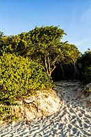 Vegetação de restinga na Praia da Daniela. Florianópolis, Santa Catarina, Brasil. / Sandbank vegetation at Daniela Beach. Florianopolis, Santa Catarina, Brazil.