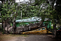 Crushed by a storm several years ago, this bus fits into the local landscape and the tree is thriving.
