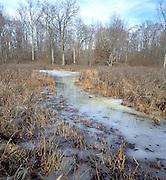 Delmarva Bay, vernal pool, in winter; DE, Blackbird State Forest