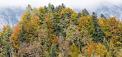 THEMENBILD - herbstlich gefärbte Bäume an einem sonnigen Herbsttag, aufgenommen am 22. Oktober 2015, Baumkirchen, Österreich // autumnal colored trees on a sunny Autumn Day, Baumkirchen, Austria on 2015/10/22. EXPA Pictures © 2015, PhotoCredit: EXPA/ Jakob Gruber