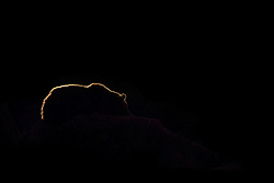 Silhouette of a Bear sleeping on a rocky cliffside  in the Wildlife Park of Cabárceno in Spain.