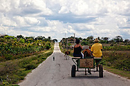 Horse and cart near La Chomba, Holguin, Cuba.