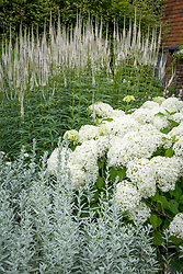 Hydrangea 'Annabelle' with Veronicastrum and artemisa? in the White Garden at Sissinghurst Castle