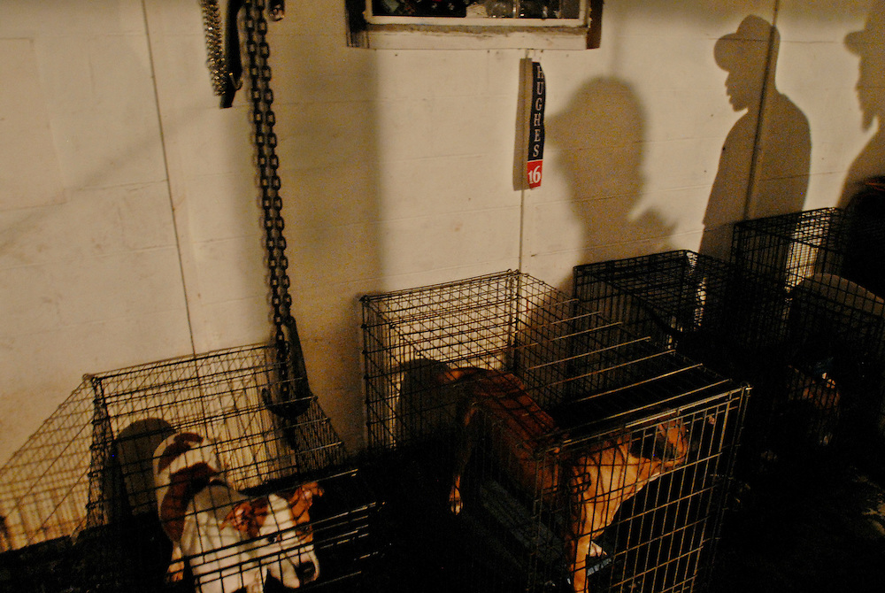Caged dogs are pictured in the basement of the B-House during an all night party in Gary, Indiana. Members of the B-House deal in narcotics and prostitution.