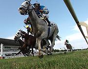 Cozzetti (grey) wins the American Derby (G3) Saturday afternoon at Arlington Park with jockey Shaun Bridgmohan aboard.