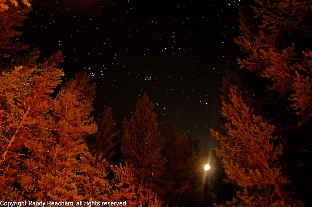 Moon and stars over a lodgepole pine forest. Yaak Valley Montana