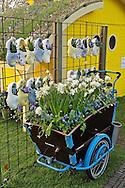Symbolic wooden shoes and flowers, Keukenhof Gardens, Lisse, Netherlands