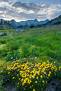 Alpine basin of Mount Rohr, in the foreground are Yellow Monkey-Flowers (Mimulus guttatus), Coast Mountains British Columbia Canada beauty in nature