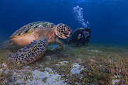 A diver takes a photo of a giant turtle in the waters around Puerto Galera, the Philippines.<br />