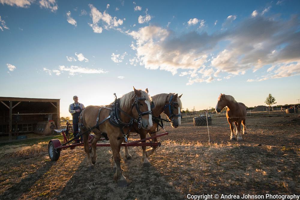 Horsepower, Cayuseqm Milton Freewater,