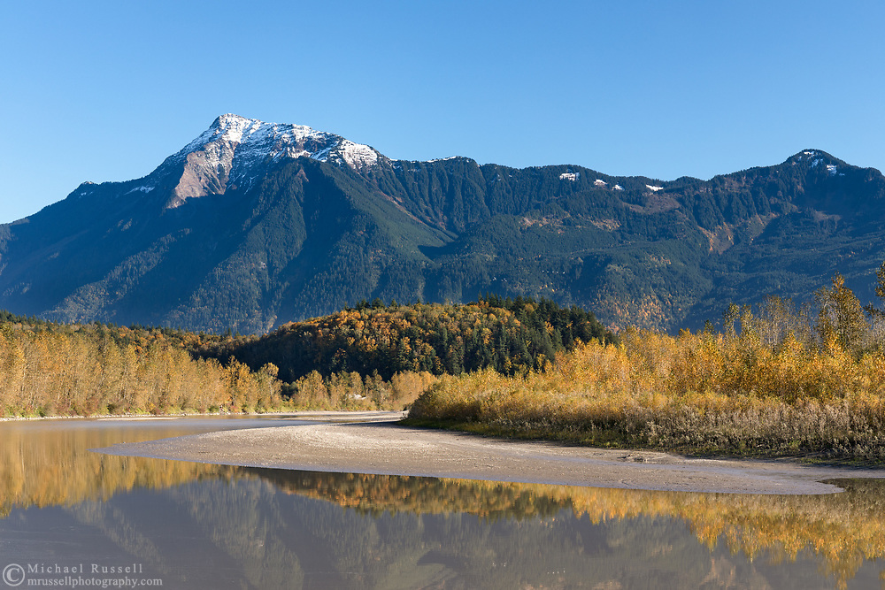 Mount Cheam and the Fraser River in Agassiz, British Columbia, Canada. Most of the trees providing fall foliage along the banks of the Fraser River are Black Cottonwood (Populus trichocarpa).  The colorful trees on the hill in the middle of the photo are predominantly Bigleaf Maples (Acer macrophyllum).