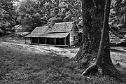 The Ogle Place, Gatlinburg, TN.  In 1879, Bud and Cindy Ogle built a cabin, a four pen barn on the rise above, and a tub mill back in the woods on LeConte Creek.  It's nearly unimaginable that a farm and a family could subsist on this hard, rocky soil.  But corn was grown here, as well as other vegetables, and an orchard produced apples.  Neighbors who came to grind their corn paid a price in meal, and excess food and apples were traded in neighboring towns.  Stepping inside the rough hewn planks of the house, it's difficult to wrap your head around a family with eight children living in a space the size of this, but they flourished and their descendants multiplied.  The Ogle name is still popular in Tennessee.  The little clearing is surrounded by thick forest, but maybe it wasn't always so.  Alone, first up the road on this cool spring morning, I crouch above the house and listen.  There's a busy woodpecker on a hollow tree--birds and forest are reclaiming the land.  But still, I can almost hear the noise of feet shuffling and hoes digging.  Smell the wood smoke and the barn muck.  See the flash of a face in a window.   After a life of it, the homestead changed hands and, later still, got assimilated into the national park.  It hasn't been lived in for a long time. But, occupied or not, the place has stood solid, and as long as it does it'll be Bud Ogle's.