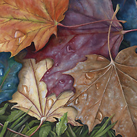 Freshly fallen maple leaves, wet with dew, reflect the morning light in the season's riot of color. <br />