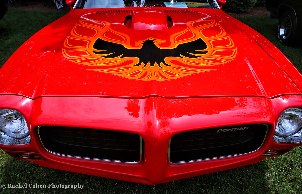&quot;Light My Fire&quot;<br /> <br /> 1973 Pontiac Firebird Trans Am!!<br /> An awesome view of a cool All American Classic Muscle Car!!<br /> Full on front and hood view!!<br /> <br /> Cars and their Details by Rachel Cohen