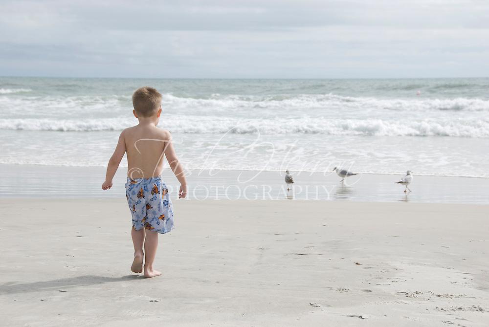 A young boy walks toward three gulls at the beach.