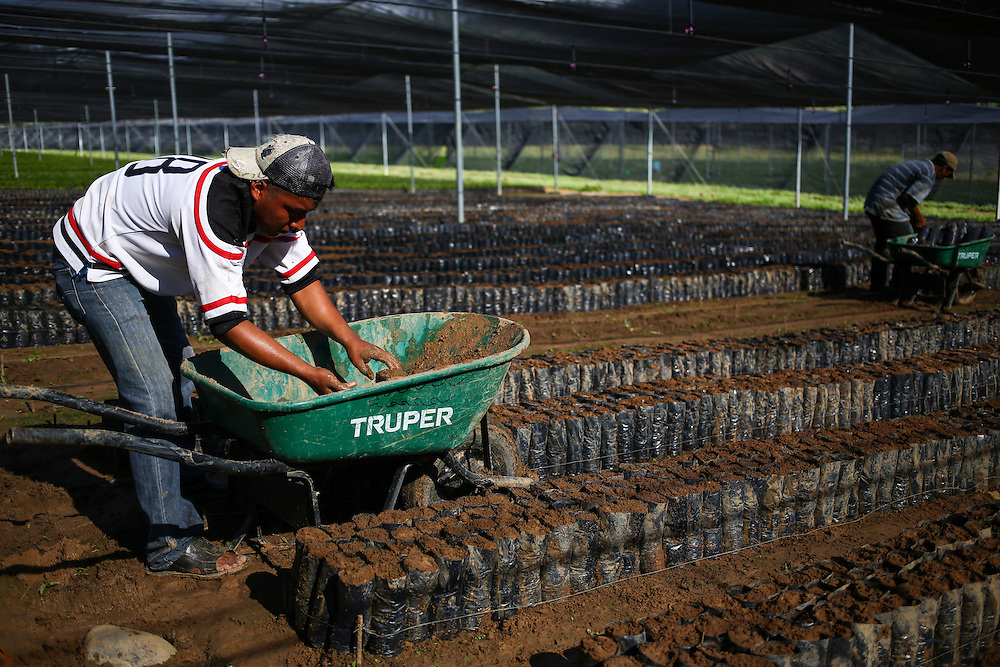 Seed and soil bags are organized in the Jaltenango coffee tree nursery in Chiapas, Mexico. (Joshua Trujillo, Starbucks)