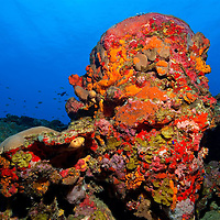 Old encrusted barrel sponge in the Caribbean