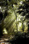 Light Streams through the trees onto a jungle path in Selangor National Park, Malaysia. 25th November 2011. © Roger Bool.