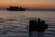 Lindblad cruise passengers in raft near shore for dawn exploration of Isla San Esteban; Sea of Cortez, Baja, Mexico.
