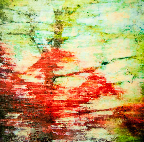 Backyard Trees Photo-Encaustic Art 10x10