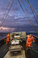 As the sun sets, strikers Gary Batchelder and Brad Burton pull in the last catch of the day on the shrimping trawler the Lady Kaye  |  August 27, 2008
