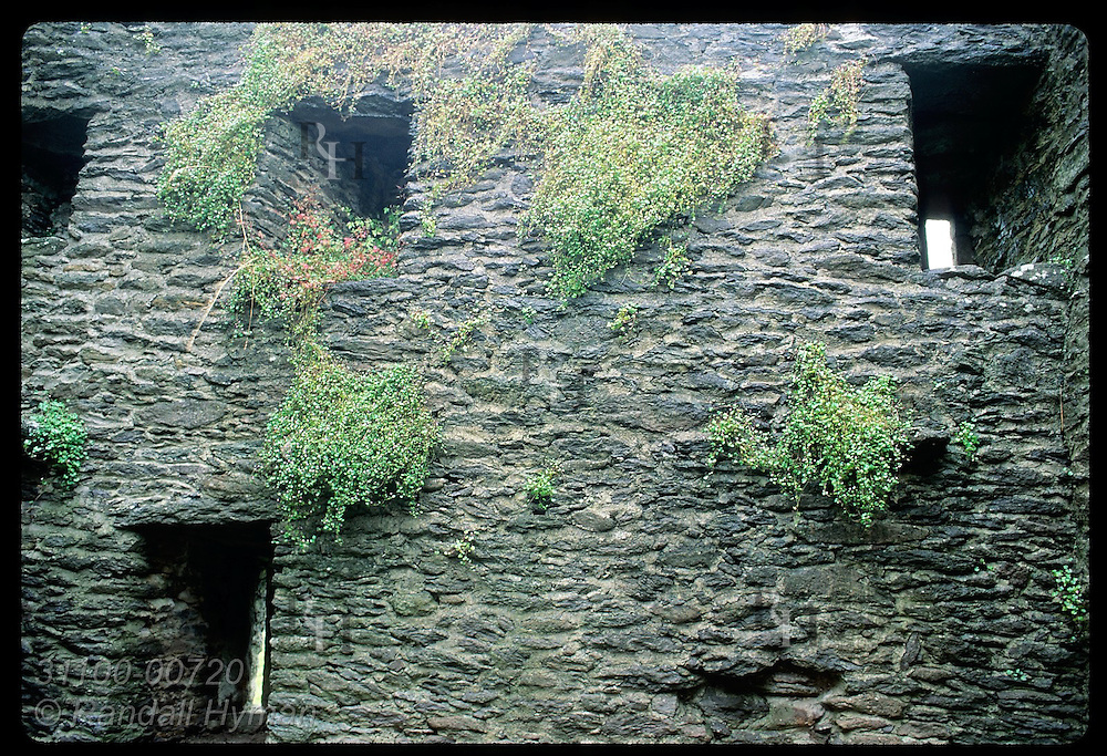 High windows punctuate the thick walls of St. Brendan's House, a medieval clergy house; Dingle. Ireland