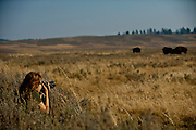 Rebecca Gaal photgraphing Bison, Bos bison, at Yellowstone National Park, WY, on Sept. 5, 2012.  (Photo by Aaron Schmidt © 2012)