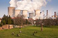 DEU, Germany, North Rhine-Westphalia, the brown coal power station Niederaussem near Bergheim, meadow in the district Auenheim. - <br /> <br /> DEU, Deutschland, Nordrhein-Westfalen, das Braunkohlekraftwerk Niederaussem bei Bergheim, Wiese im Stadtteil Auenheim.